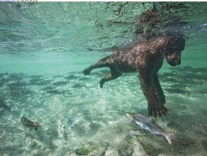 Argh!... can't... reach... stupid fish!
