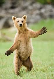 "The bears in my dreams have magical powers and abilities as demonstrated by this ""Jazz Hands"" bear."