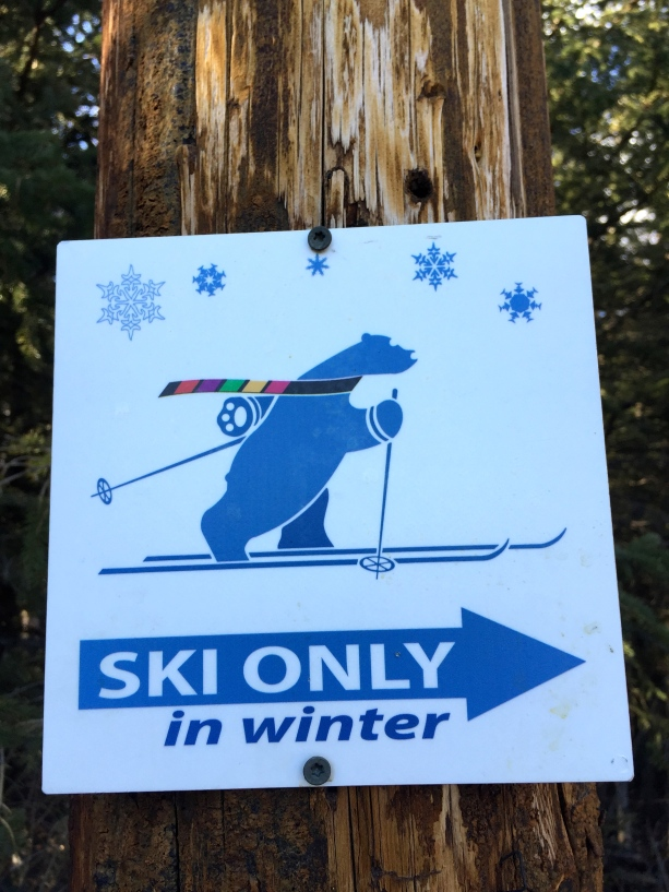 Dapper ski bear.