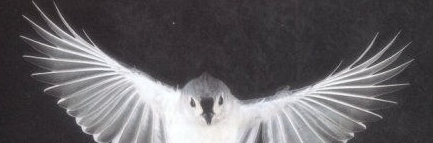 flight-shape-Titmouse